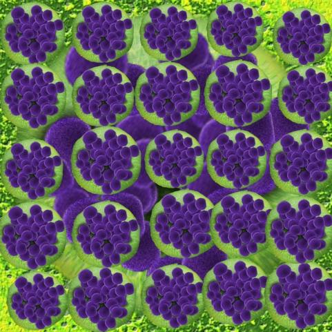 bacteria-108896_960_720h_edited-1