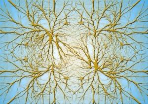 neurons-582052_960_720