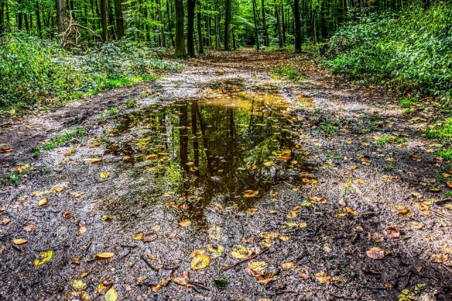 puddle-2814243_960_720 (1)