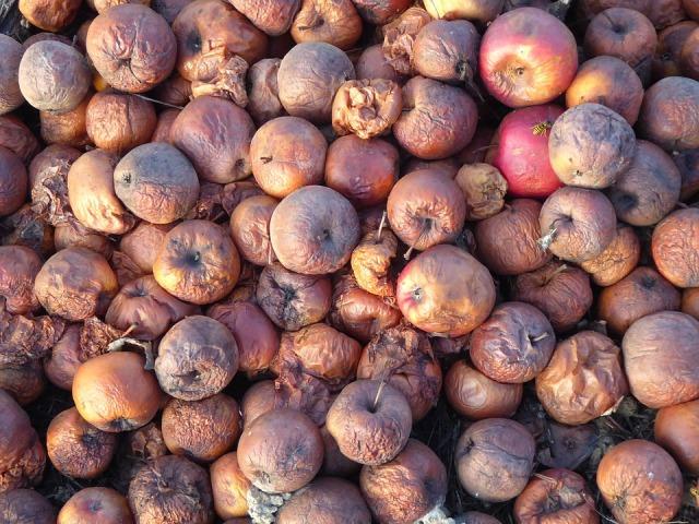 cider-apples-2908856_960_720