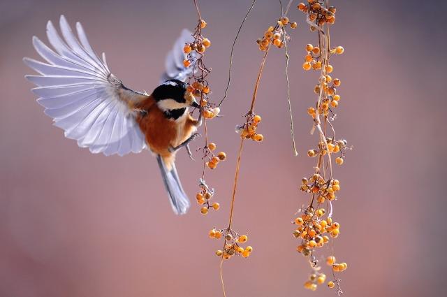 bird-1045954_1280.jpg